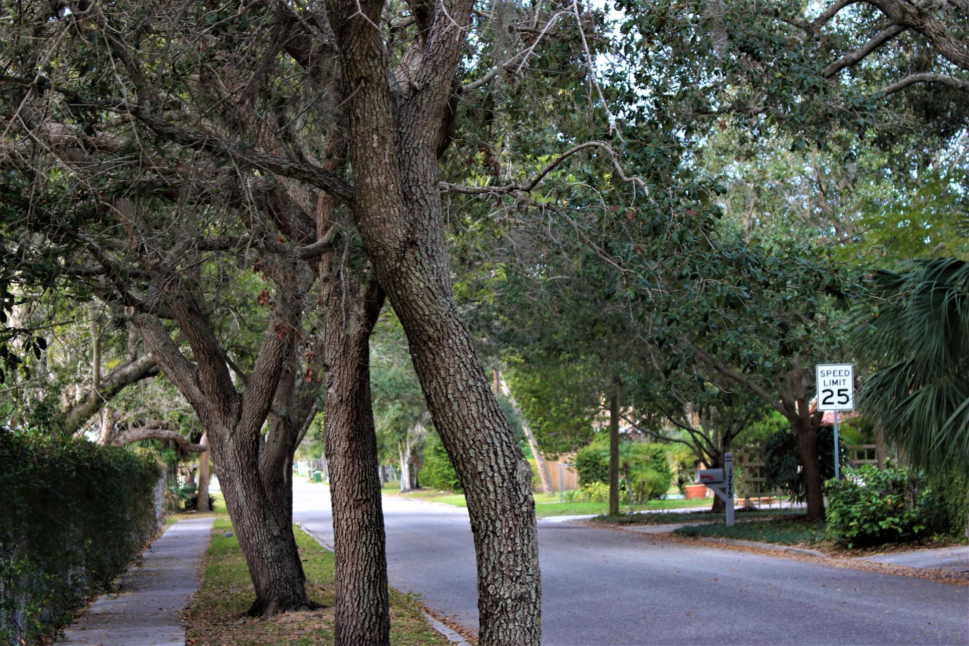 Tree lined street in the City of Sarasota.